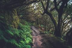 Rain Forest, Ténérife, Spain.
